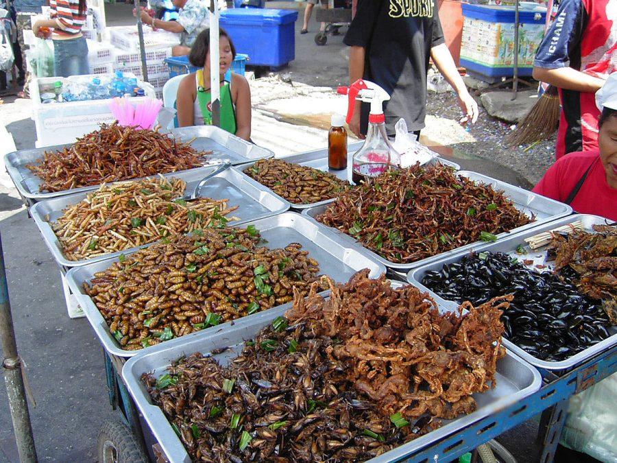 Benefits of Bug Eating