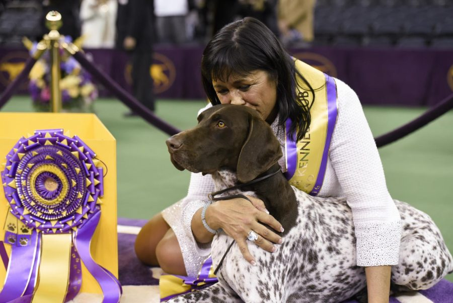What's a Dog Show?...a Crash Course in Conformation and More