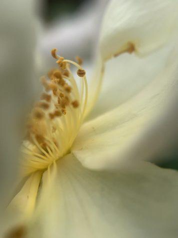 "Meg Rubino - ""Bloom"""